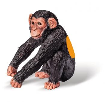 Schimpansen-Junges        D/F/I/NL