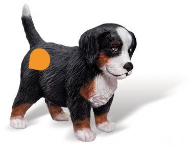 Berner Sennenhund Welpe D/F/I/NL, Tiptoi-Spielfigur